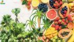 Tropikal meyve tohumu | fidanı alım | satım