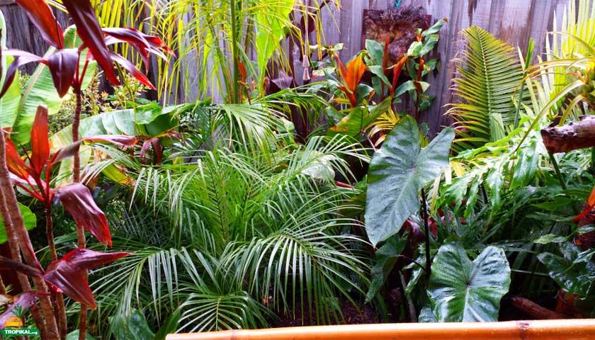 Tropikal bahçe