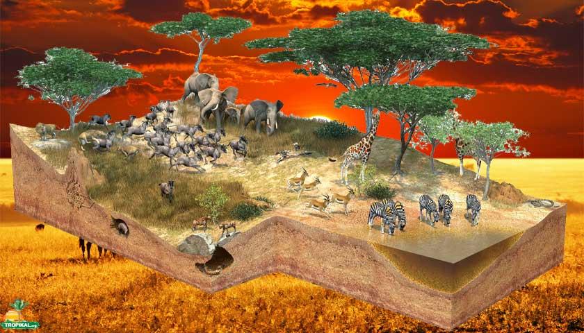 Tropikal İklim (Subtropikal - Savan)